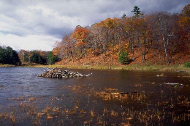 Beaver Pond Facsimile